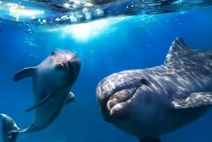 eveil-spirituel-dauphins